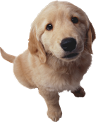 The pet directory australia worlds largest online pet directory this service gives your pet a more relaxed experience instead of being dragged to a pet salon and left with some strangers with lots of solutioingenieria Images